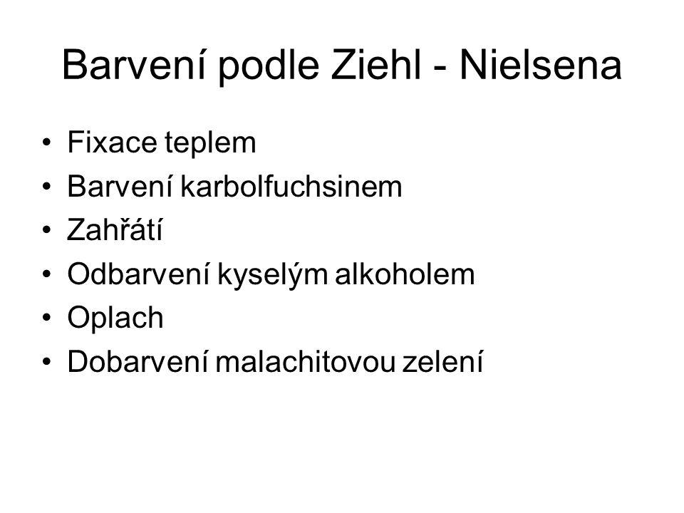 Barvení podle Ziehl - Nielsena Fixace teplem Barvení karbolfuchsinem Zahřátí Odbarvení kyselým alkoholem Oplach Dobarvení malachitovou zelení