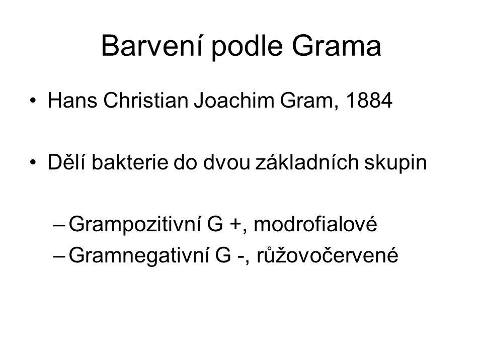 Barvení podle Grama Hans Christian Joachim Gram, 1884 Dělí bakterie do dvou základních skupin –Grampozitivní G +, modrofialové –Gramnegativní G -, růž