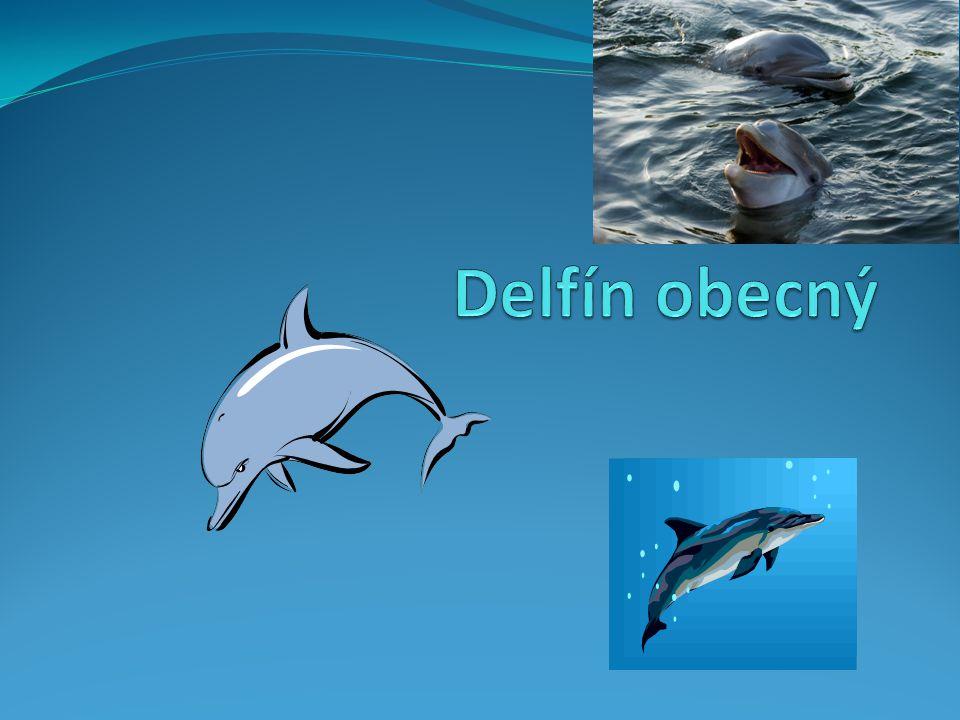 Obecné Údaje Delfín obecný Delphinus delphis Je druh z Kytovců z čeledě DELFÍNOVITÍ Délka jeho těla činí 1,8–2,6 m, hmotnost 90-140 kg.