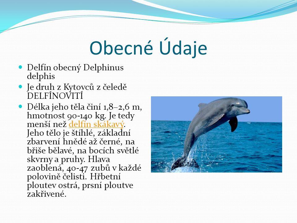 Obecné Údaje Delfín obecný Delphinus delphis Je druh z Kytovců z čeledě DELFÍNOVITÍ Délka jeho těla činí 1,8–2,6 m, hmotnost 90-140 kg. Je tedy menší