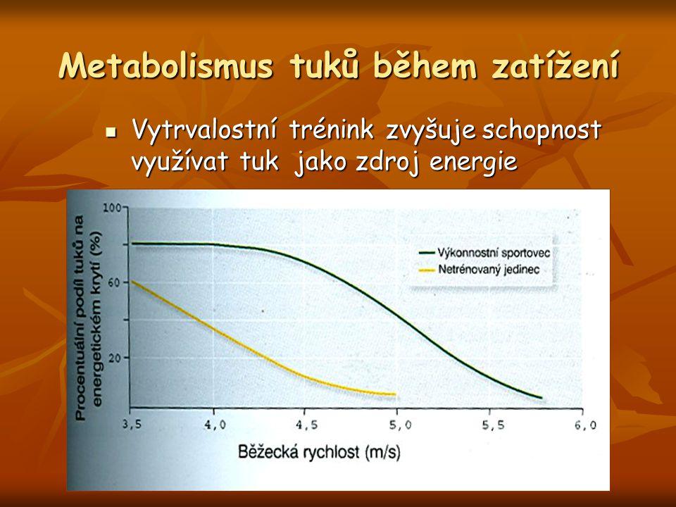 Metabolismus tuků během zatížení Vytrvalostní trénink zvyšuje schopnost využívat tuk jako zdroj energie Vytrvalostní trénink zvyšuje schopnost využíva