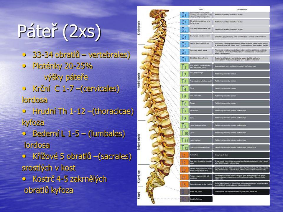 Páteř (2xs) 33-34 obratlů – vertebrales) 33-34 obratlů – vertebrales) Ploténky 20-25% Ploténky 20-25% výšky páteře výšky páteře Krční C 1-7 –(cervicales) Krční C 1-7 –(cervicales)lordosa Hrudní Th 1-12 –(thoracicae) Hrudní Th 1-12 –(thoracicae)kyfoza Bederní L 1-5 – (lumbales) Bederní L 1-5 – (lumbales) lordosa lordosa Křížové 5 obratlů –(sacrales) Křížové 5 obratlů –(sacrales) srostlých v kost Kostrč 4-5 zakrnělých Kostrč 4-5 zakrnělých obratlů kyfoza obratlů kyfoza