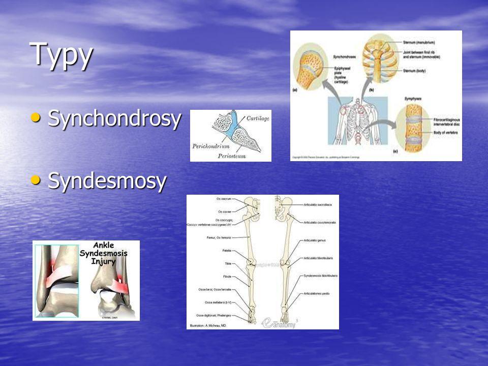 Typy Synchondrosy Synchondrosy Syndesmosy Syndesmosy