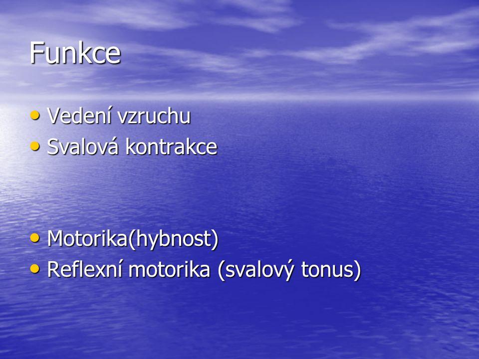 Funkce Vedení vzruchu Vedení vzruchu Svalová kontrakce Svalová kontrakce Motorika(hybnost) Motorika(hybnost) Reflexní motorika (svalový tonus) Reflexn
