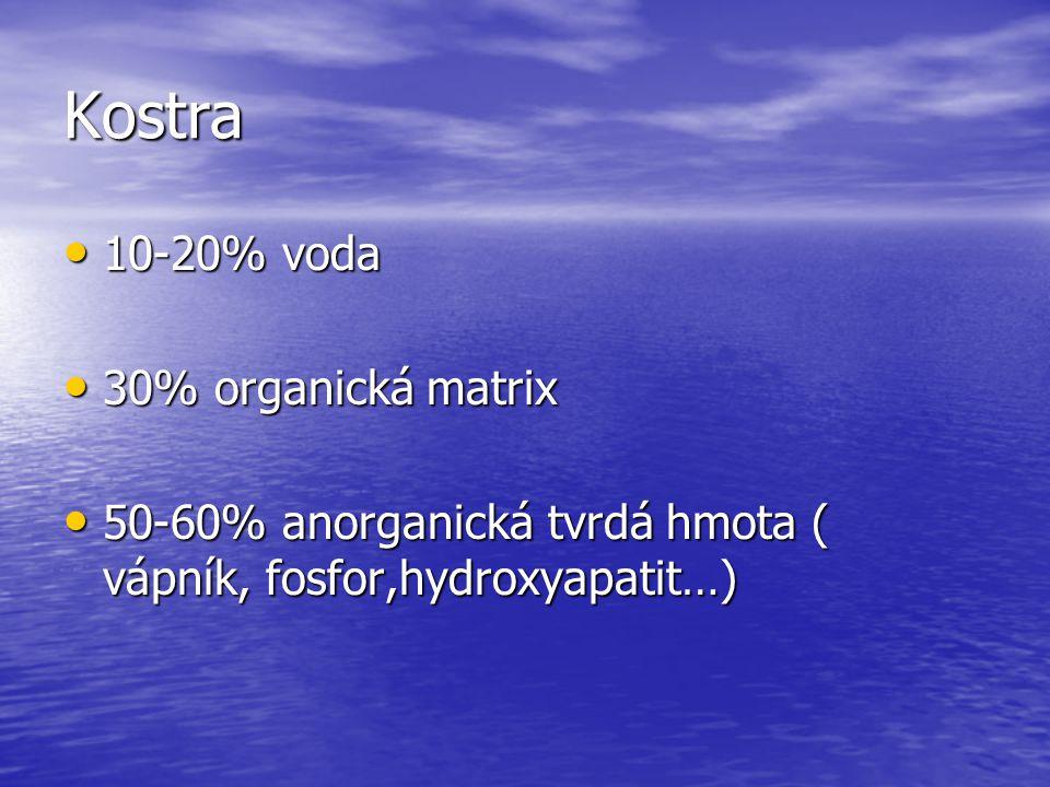 Kostra 10-20% voda 10-20% voda 30% organická matrix 30% organická matrix 50-60% anorganická tvrdá hmota ( vápník, fosfor,hydroxyapatit…) 50-60% anorga