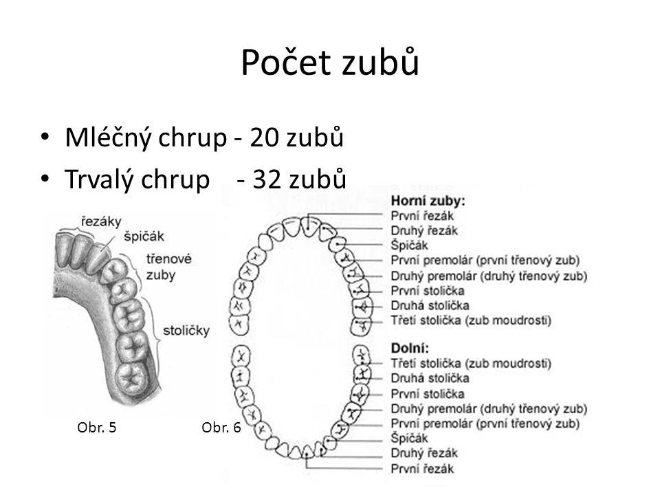 Počet zubů Mléčný chrup - 20 zubů Trvalý chrup - 32 zubů Obr. 5Obr. 6