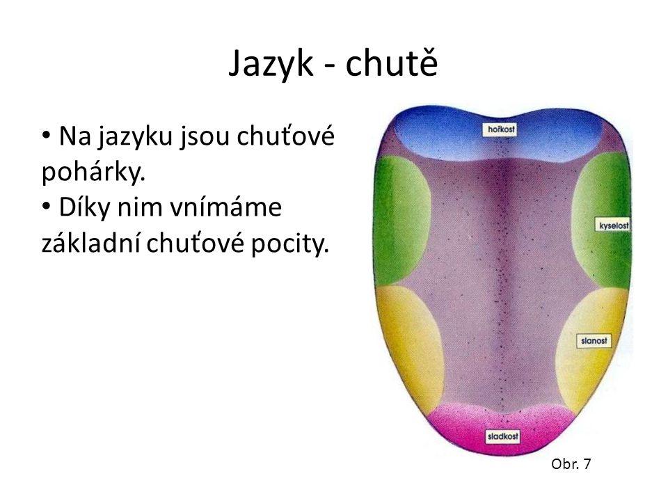 Jazyk - chutě Na jazyku jsou chuťové pohárky. Díky nim vnímáme základní chuťové pocity. Obr. 7