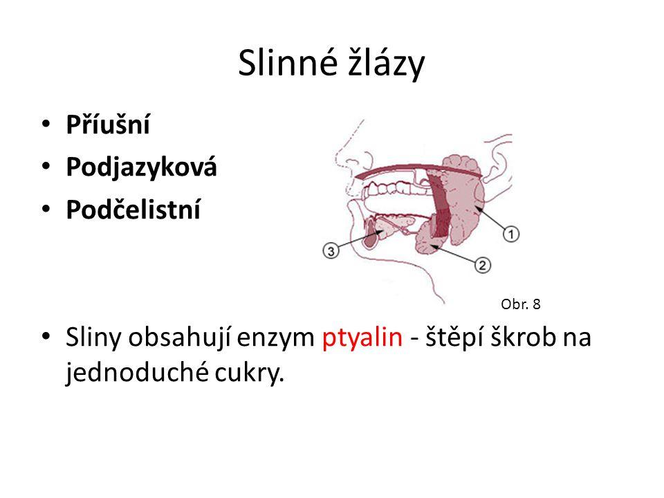 Slinné žlázy Příušní Podjazyková Podčelistní Sliny obsahují enzym ptyalin - štěpí škrob na jednoduché cukry. Obr. 8