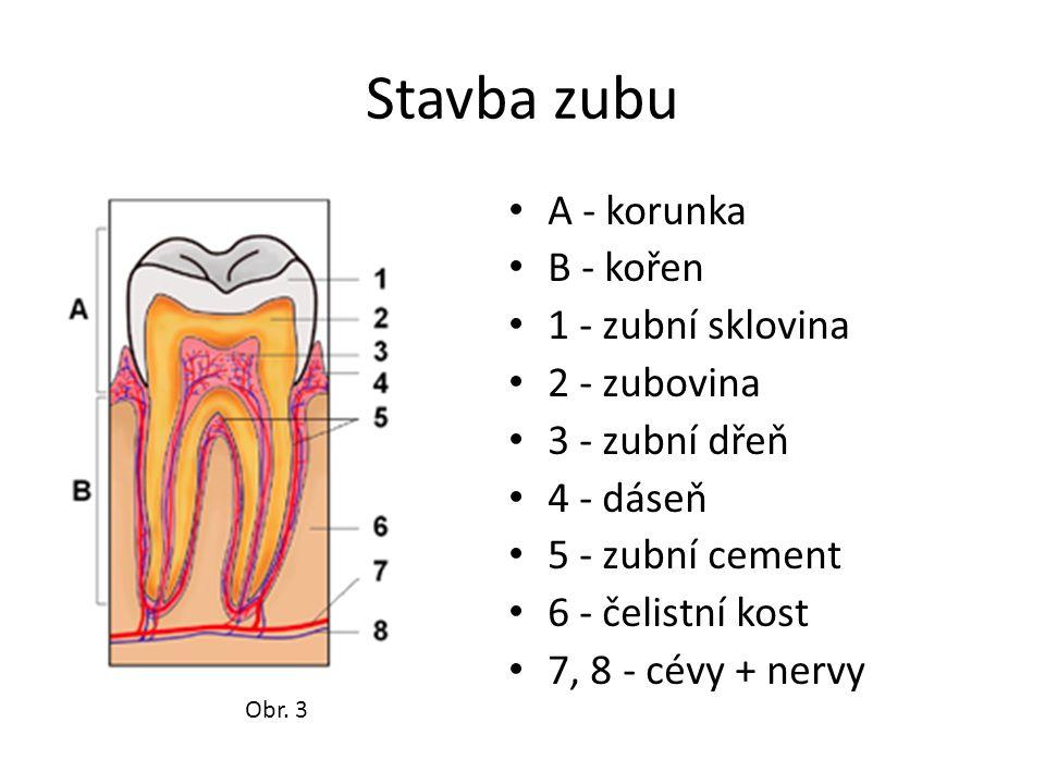 Stavba zubu A - korunka B - kořen 1 - zubní sklovina 2 - zubovina 3 - zubní dřeň 4 - dáseň 5 - zubní cement 6 - čelistní kost 7, 8 - cévy + nervy Obr.