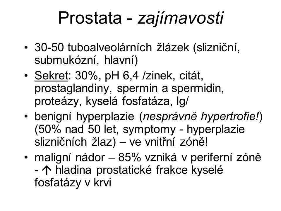 Prostata - zajímavosti 30-50 tuboalveolárních žlázek (slizniční, submukózní, hlavní) Sekret: 30%, pH 6,4 /zinek, citát, prostaglandiny, spermin a spermidin, proteázy, kyselá fosfatáza, Ig/ benigní hyperplazie (nesprávně hypertrofie!) (50% nad 50 let, symptomy - hyperplazie slizničních žlaz) – ve vnitřní zóně.