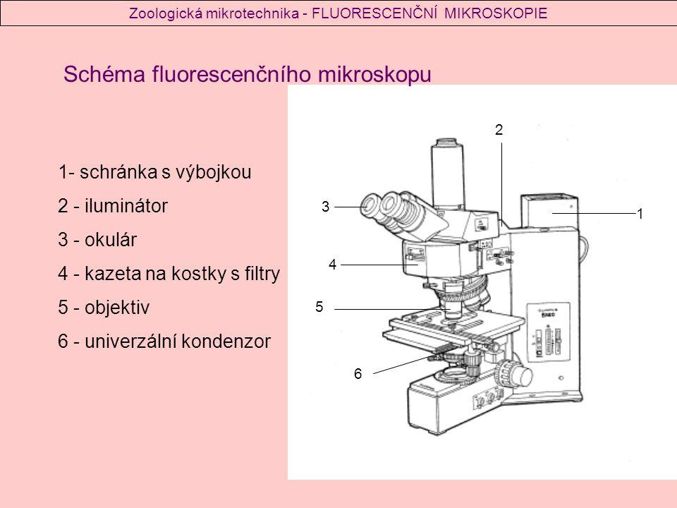 1 2 3 4 5 6 1- schránka s výbojkou 2 - iluminátor 3 - okulár 4 - kazeta na kostky s filtry 5 - objektiv 6 - univerzální kondenzor Schéma fluorescenčního mikroskopu Zoologická mikrotechnika - FLUORESCENČNÍ MIKROSKOPIE