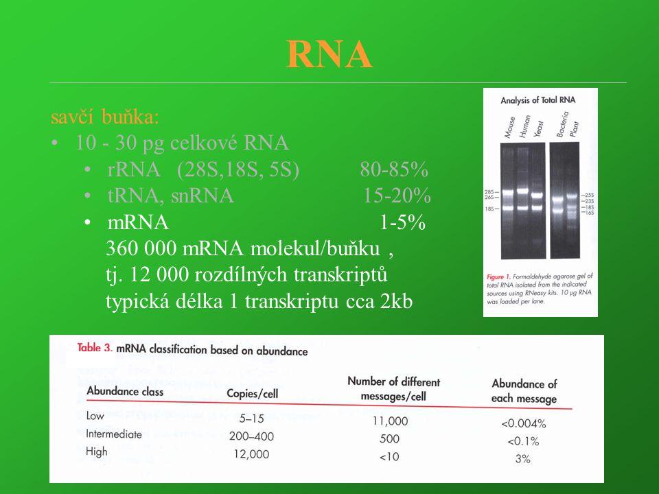 RNA savčí buňka: 10 - 30 pg celkové RNA rRNA (28S,18S, 5S) 80-85% tRNA, snRNA 15-20% mRNA 1-5% 360 000 mRNA molekul/buňku, tj. 12 000 rozdílných trans