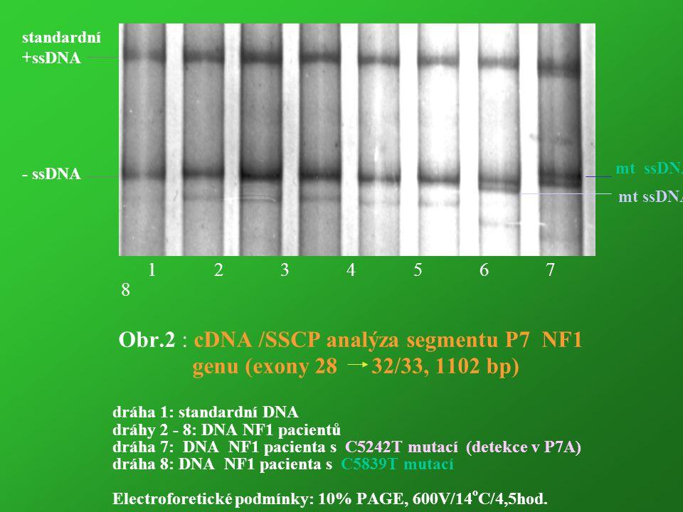 1 2 3 4 5 6 7 8 Obr.2 : cDNA /SSCP analýza segmentu P7 NF1 genu (exony 28 32/33, 1102 bp) dráha 1: standardní DNA dráhy 2 - 8: DNA NF1 pacientů dráha