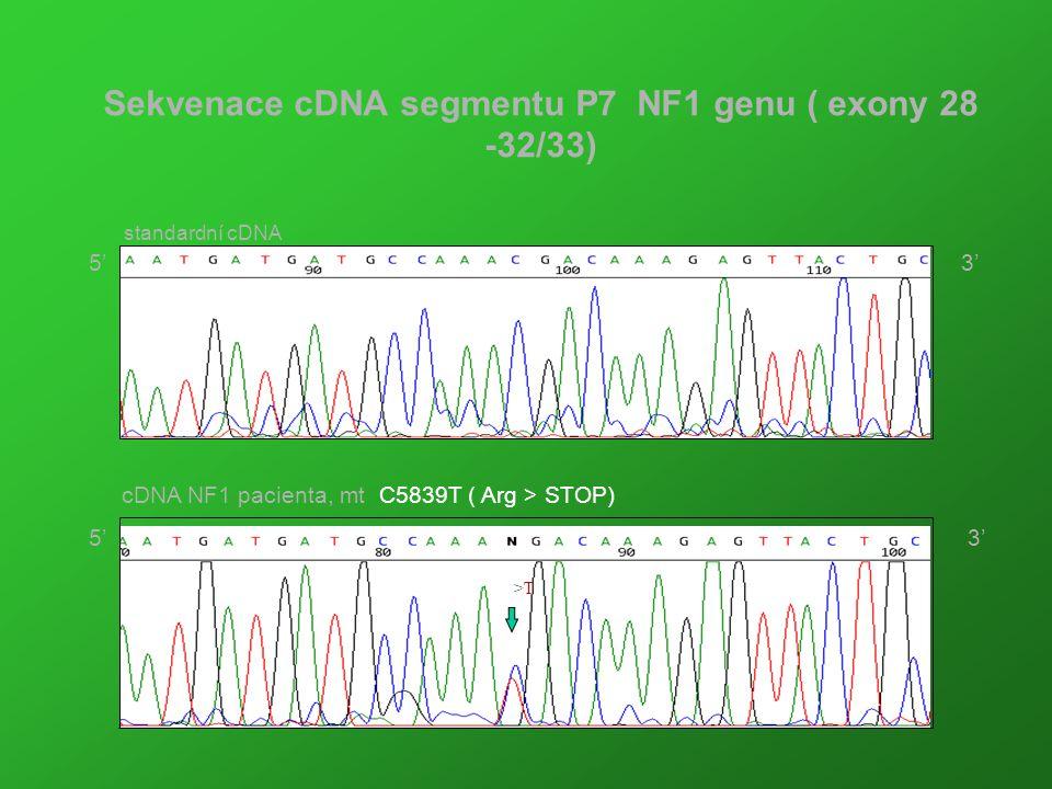 Sekvenace cDNA segmentu P7 NF1 genu ( exony 28 -32/33) C >T cDNA NF1 pacienta, mt C5839T ( Arg > STOP) standardní cDNA 5' 3'