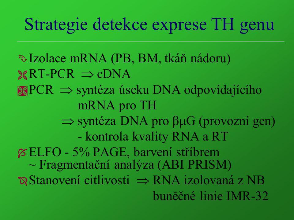 Strategie detekce exprese TH genu Ê Izolace mRNA (PB, BM, tkáň nádoru) Ë RT-PCR  cDNA Ì PCR  syntéza úseku DNA odpovídajícího mRNA pro TH  syntéza