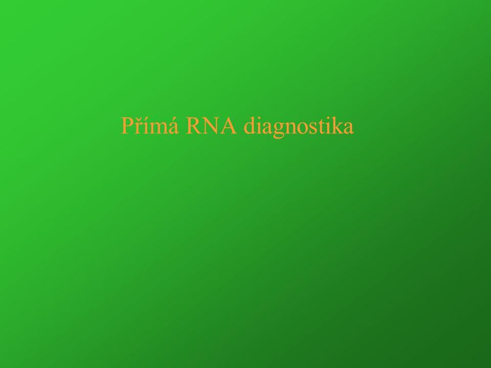 Kvantifikace cDNA PCR produktu CFTR exon 9 na LightCycler Transcripty byly izolovány z leukocytů perifrní krve.