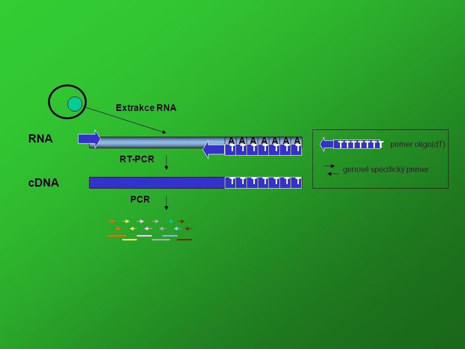 Reakce monitorována pomocí SYBR Green I.
