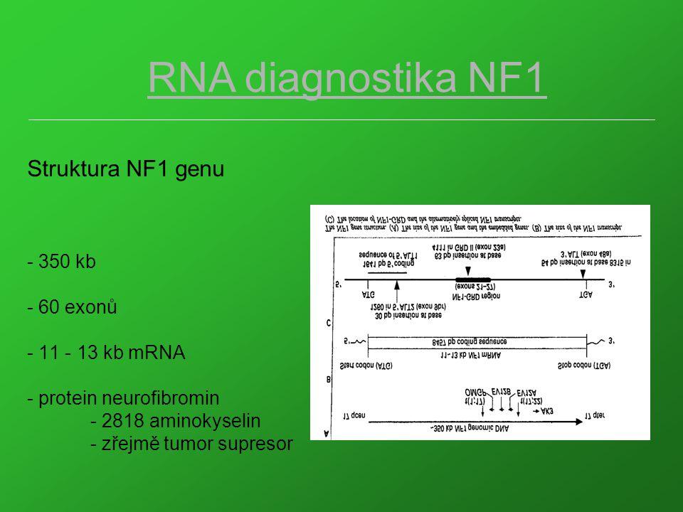 1 2 3 4 5 6 7 8 Obr.2 : cDNA /SSCP analýza segmentu P7 NF1 genu (exony 28 32/33, 1102 bp) dráha 1: standardní DNA dráhy 2 - 8: DNA NF1 pacientů dráha 7: DNA NF1 pacienta s C5242T mutací (detekce v P7A) dráha 8: DNA NF1 pacienta s C5839T mutací Electroforetické podmínky: 10% PAGE, 600V/14 o C/4,5hod.