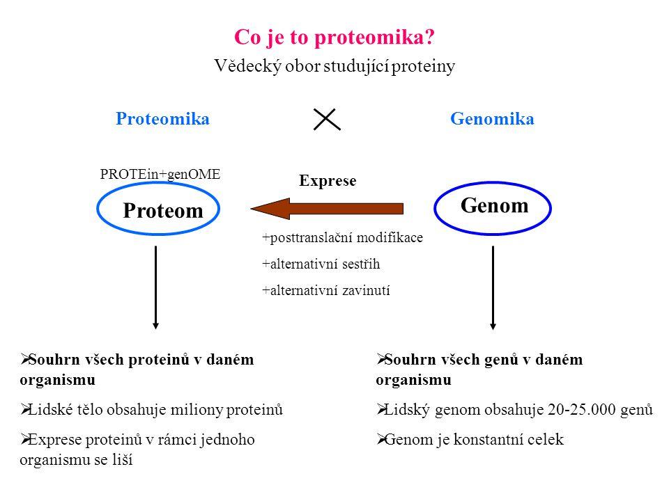Co je to proteomika? Vědecký obor studující proteiny Proteom Genom  Souhrn všech proteinů v daném organismu  Lidské tělo obsahuje miliony proteinů 