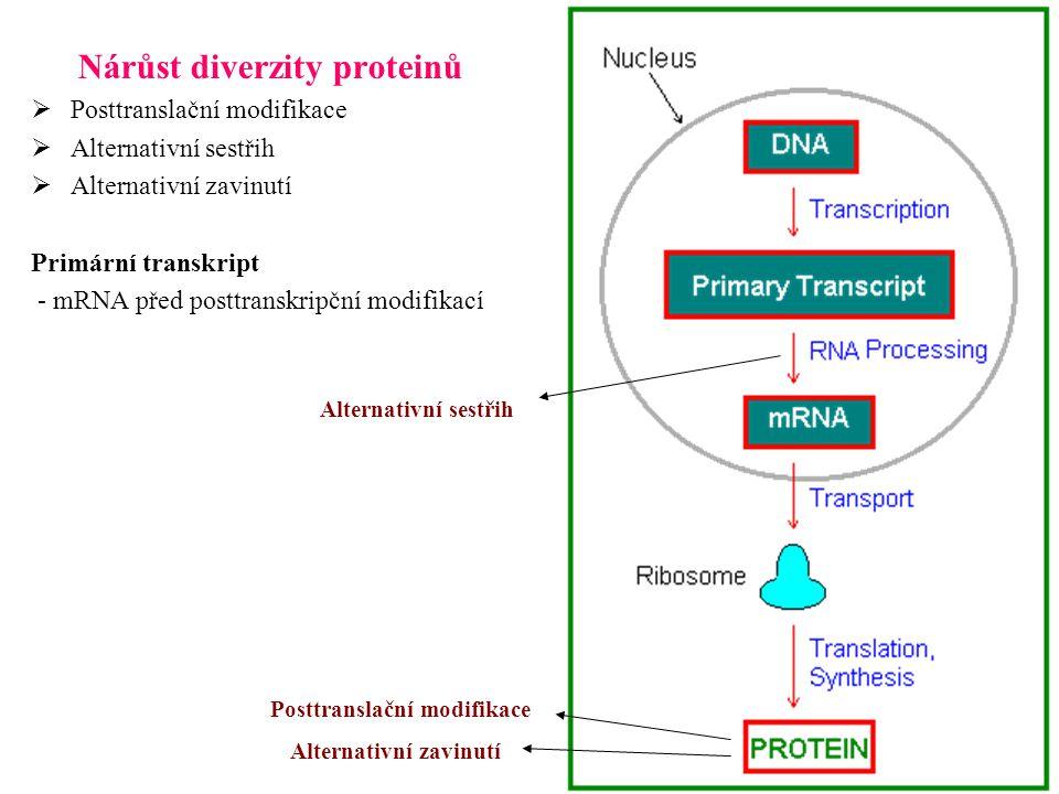 Nárůst diverzity proteinů  Posttranslační modifikace  Alternativní sestřih  Alternativní zavinutí Primární transkript - mRNA před posttranskripční modifikací Posttranslační modifikace Alternativní zavinutí Alternativní sestřih