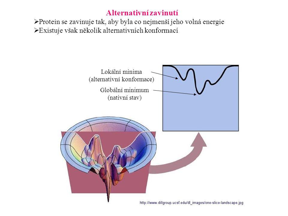 Alternativní zavinutí  Protein se zavinuje tak, aby byla co nejmenší jeho volná energie  Existuje však několik alternativních konformací Globální mi