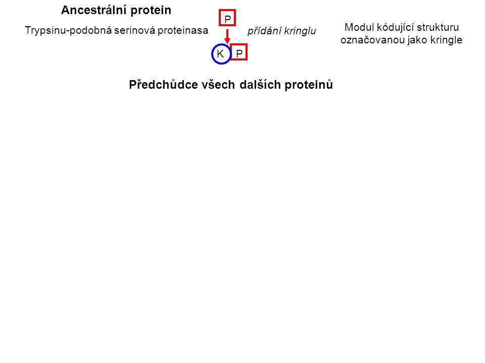 KP P K K K K KK PE P P P P E E EE E F2F2 F2F2 F2F2 F2F2 F1F1 F1F1 přidání domény EGF Urokinasa přidání fibronektinové domény 2 přidání fibronektinové domény 1 duplikace domény EGF duplikace kringlu t-PA Faktor XII
