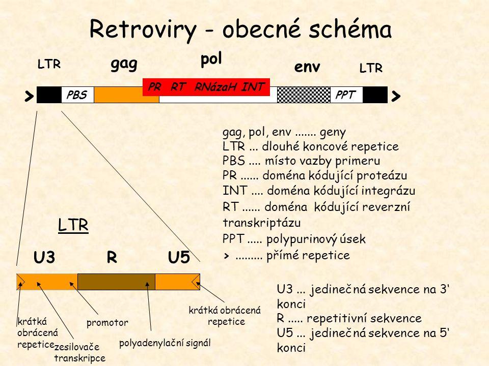 U3... jedinečná sekvence na 3' konci R..... repetitivní sekvence U5... jedinečná sekvence na 5' konci LTR gag LTR pol env PR RT RNázaH INT PBSPPT >> U