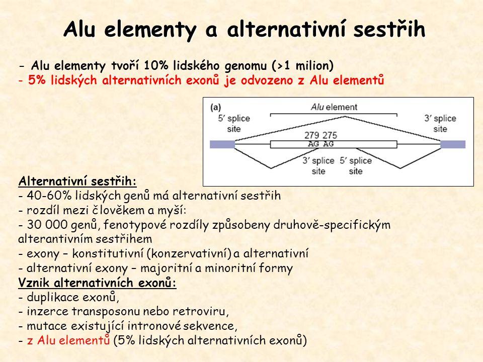 Alu elementy a alternativní sestřih - Alu elementy tvoří 10% lidského genomu (>1 milion) - 5% lidských alternativních exonů je odvozeno z Alu elementů