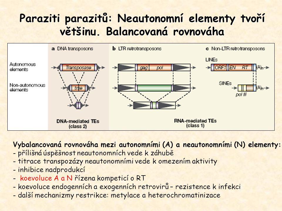 Paraziti parazitů: Neautonomní elementy tvoří většinu. Balancovaná rovnováha Vybalancovaná rovnováha mezi autonomními (A) a neautonomními (N) elementy