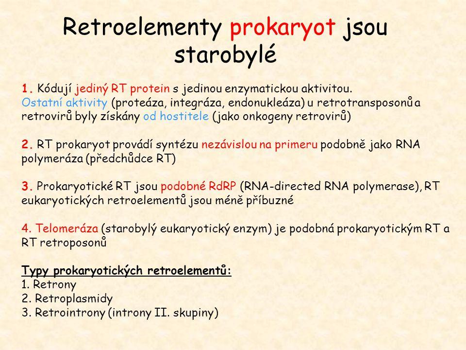Retroelementy prokaryot jsou starobylé 1. Kódují jediný RT protein s jedinou enzymatickou aktivitou. Ostatní aktivity (proteáza, integráza, endonukleá