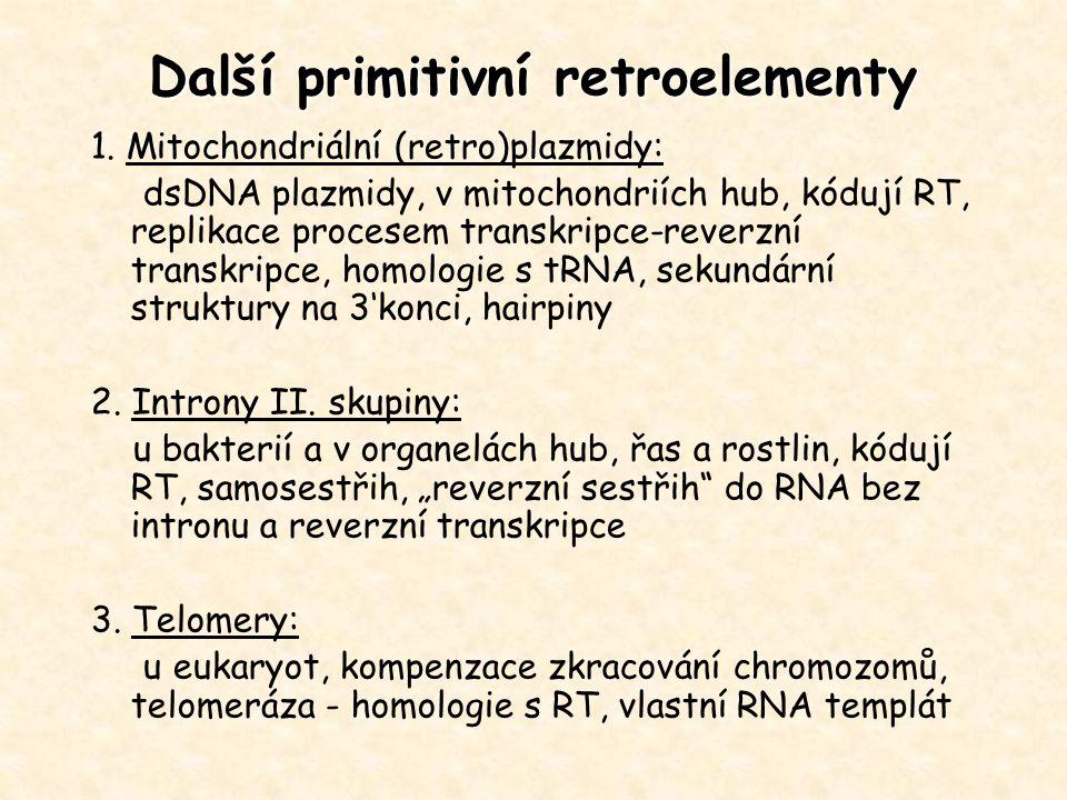 Další primitivní retroelementy 1. Mitochondriální (retro)plazmidy: dsDNA plazmidy, v mitochondriích hub, kódují RT, replikace procesem transkripce-rev