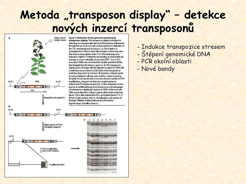 """Metoda """"transposon display"""" – detekce nových inzercí transposonů - Indukce transpozice stresem - Štěpení genomické DNA - PCR okolní oblasti - Nové ban"""