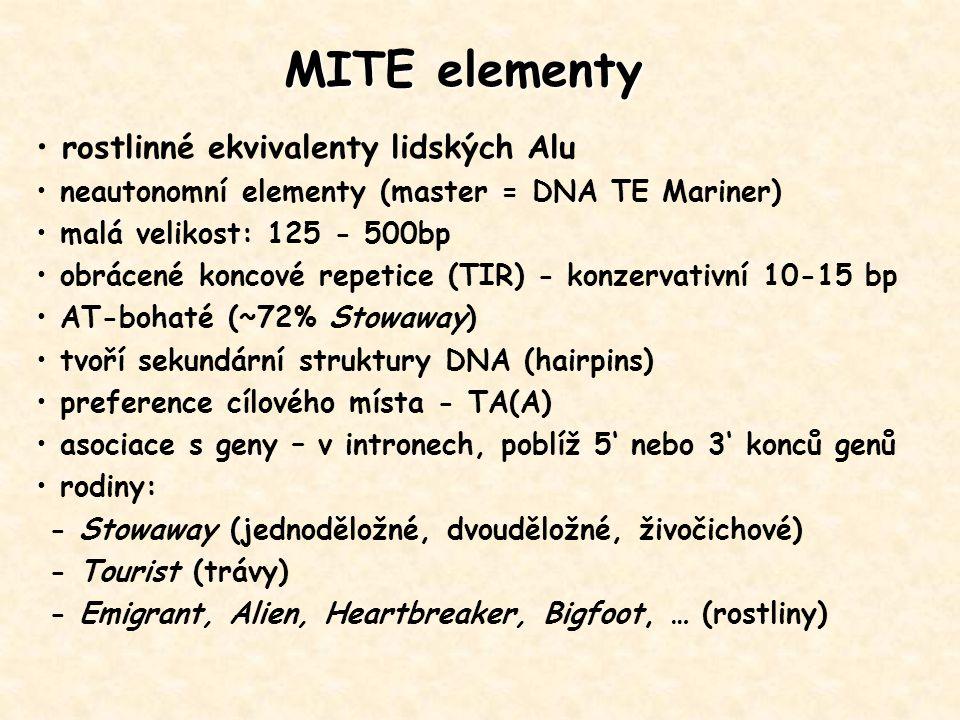 rostlinné ekvivalenty lidských Alu neautonomní elementy (master = DNA TE Mariner) malá velikost: 125 - 500bp obrácené koncové repetice (TIR) - konzerv