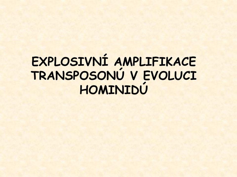 EXPLOSIVNÍ AMPLIFIKACE TRANSPOSONÚ V EVOLUCI HOMINIDÚ