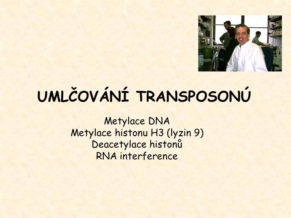 UMLČOVÁNÍ TRANSPOSONÚ Metylace DNA Metylace histonu H3 (lyzin 9) Deacetylace histonů RNA interference