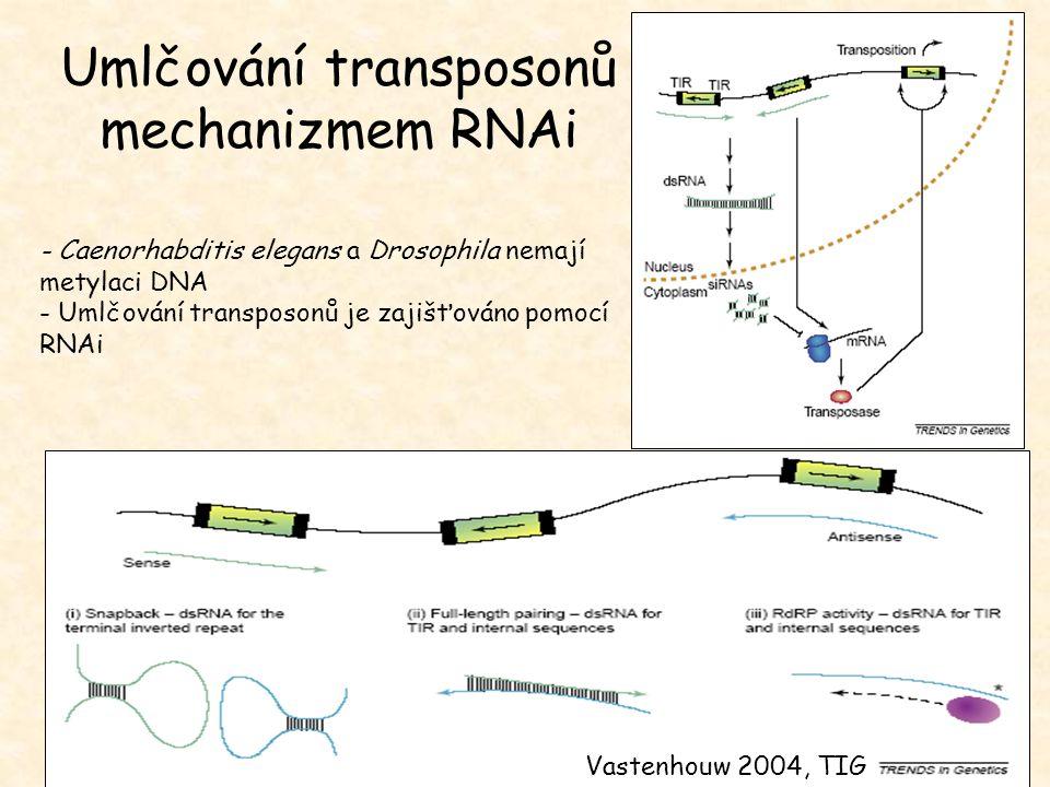 Umlčování transposonů mechanizmem RNAi - Caenorhabditis elegans a Drosophila nemají metylaci DNA - Umlčování transposonů je zajišťováno pomocí RNAi Va