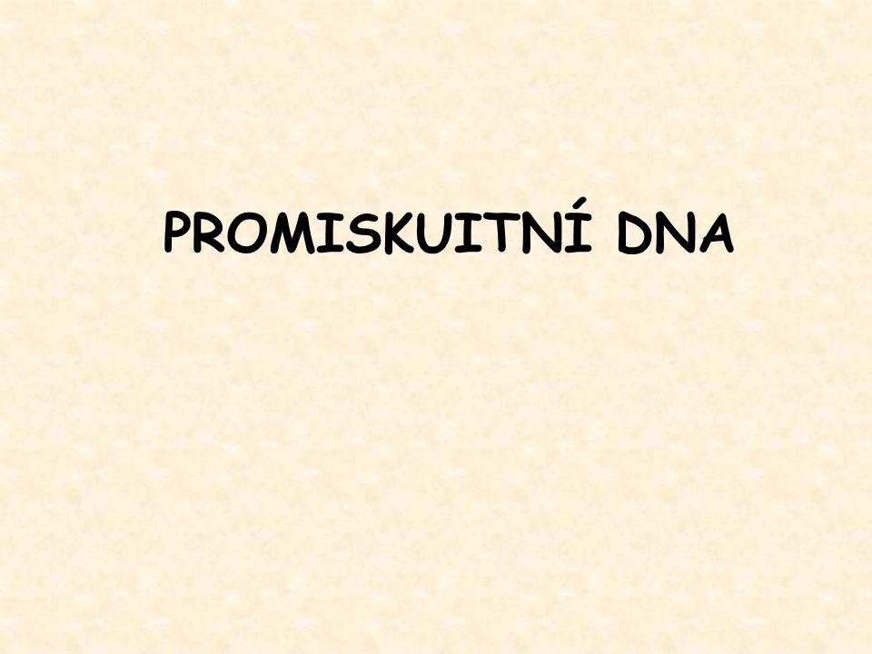 PROMISKUITNÍ DNA