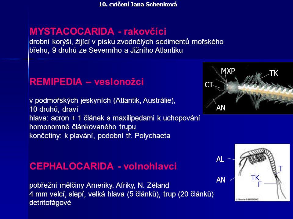 REMIPEDIA – veslonožci v podmořských jeskyních (Atlantik, Austrálie), 10 druhů, draví hlava: acron + 1 článek s maxilipedami k uchopování homonomně čl