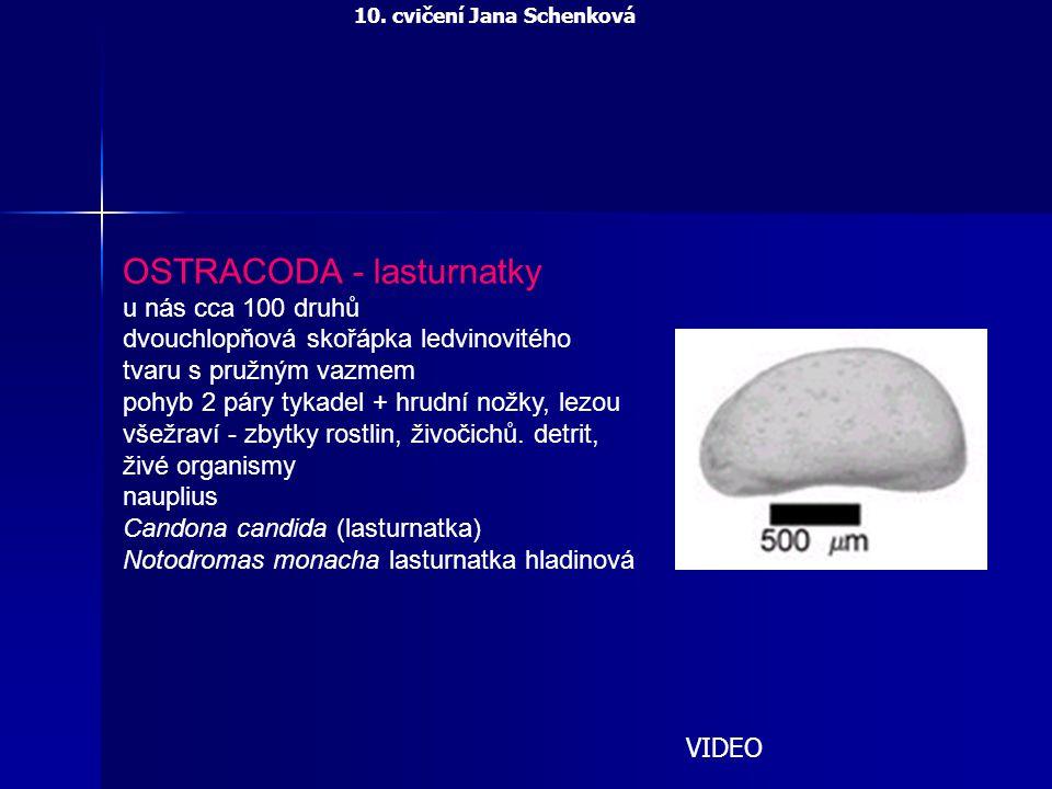 OSTRACODA - lasturnatky u nás cca 100 druhů dvouchlopňová skořápka ledvinovitého tvaru s pružným vazmem pohyb 2 páry tykadel + hrudní nožky, lezou vše