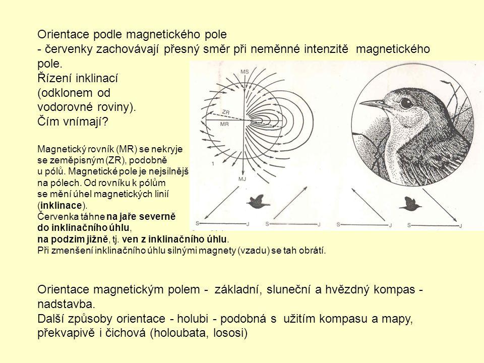 Orientace podle magnetického pole - červenky zachovávají přesný směr při neměnné intenzitě magnetického pole. Řízení inklinací (odklonem od vodorovné