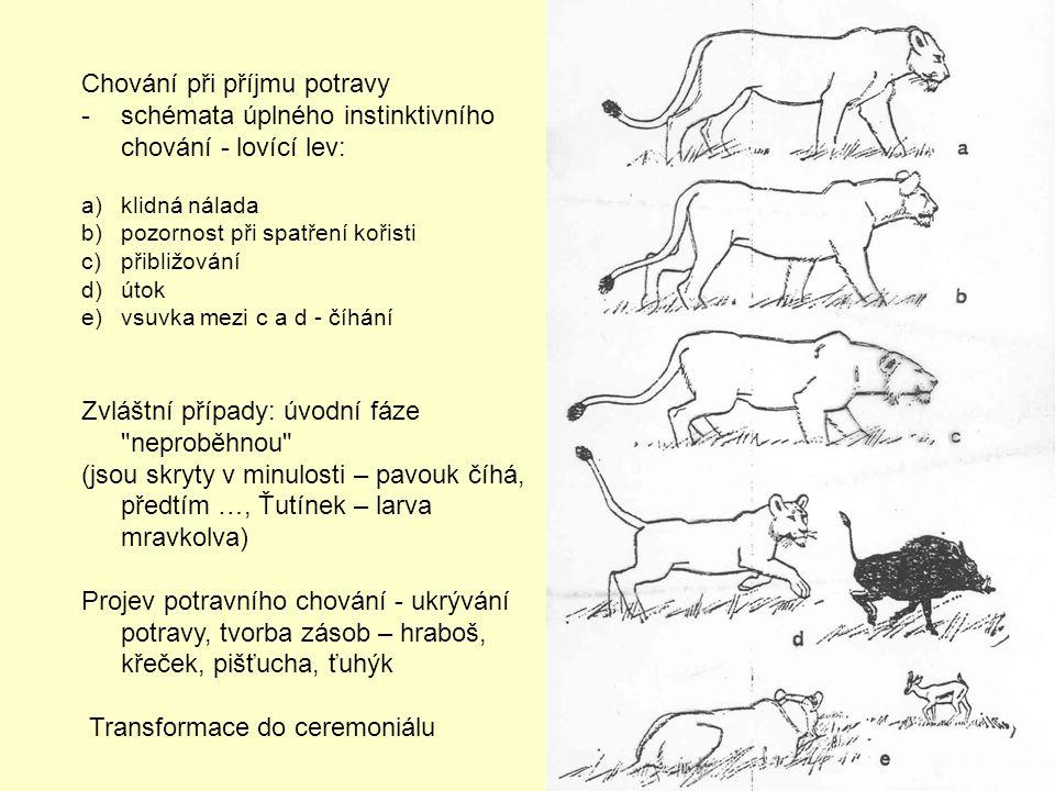 Chování při příjmu potravy -schémata úplného instinktivního chování - lovící lev: a)klidná nálada b)pozornost při spatření kořisti c)přibližování d)út