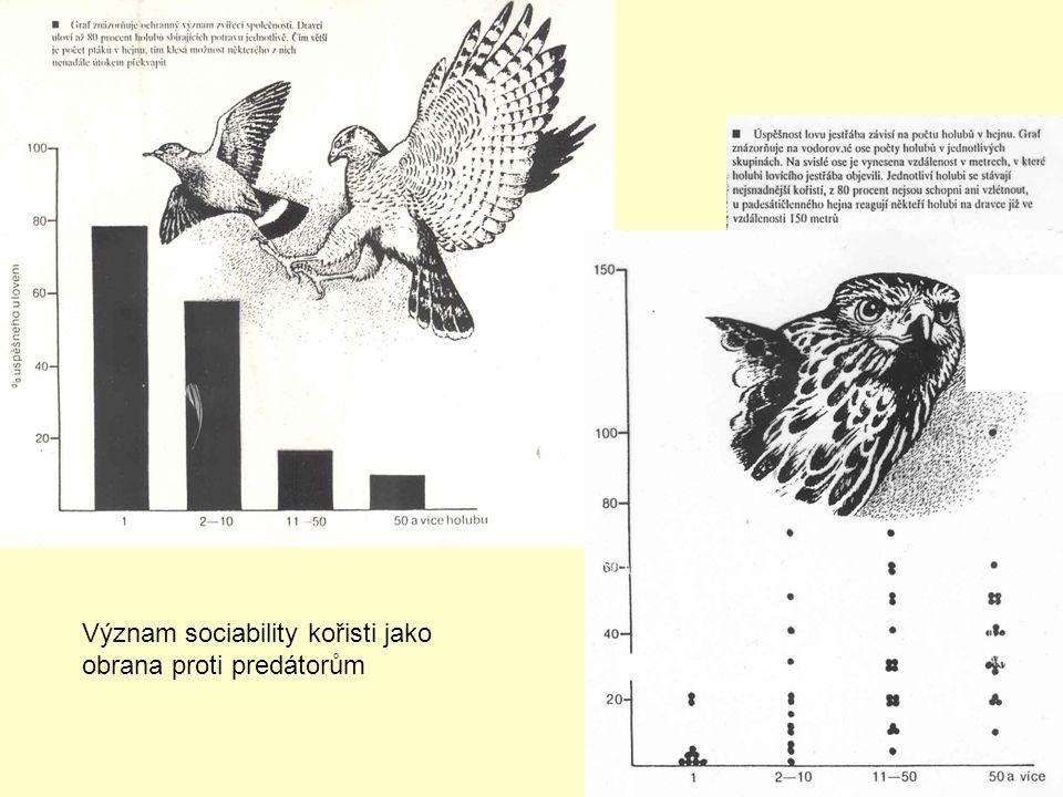 Význam sociability kořisti jako obrana proti predátorům