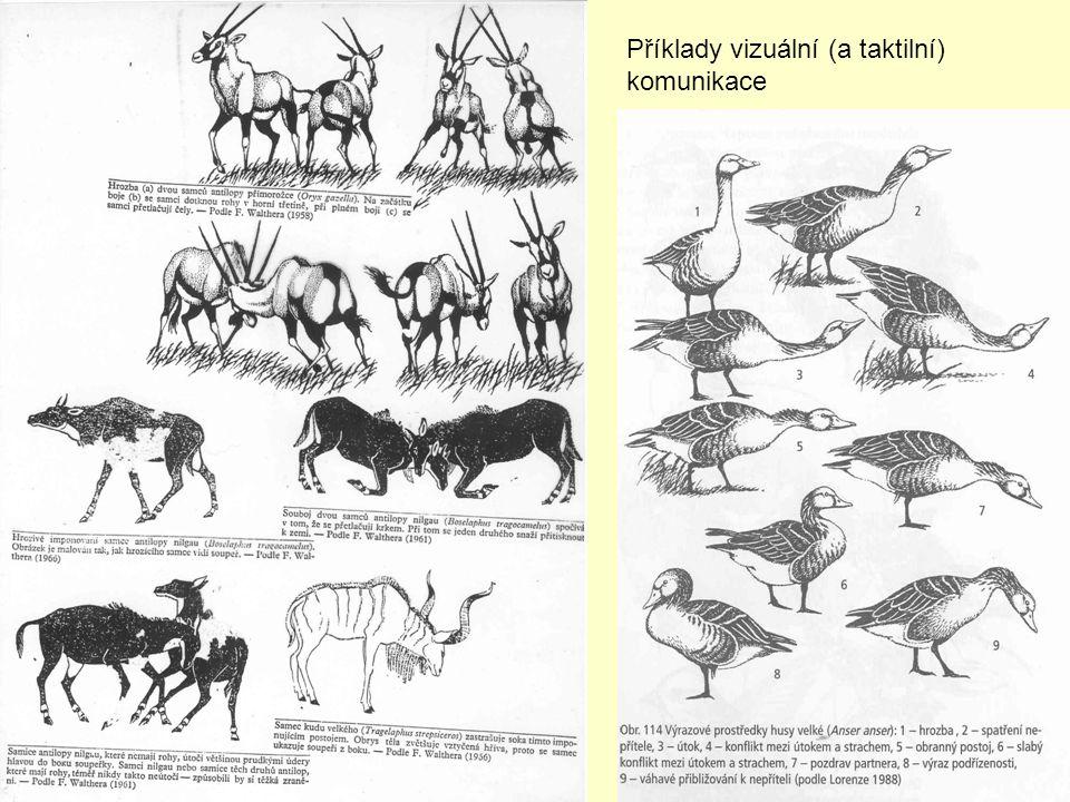 Příklady vizuální (a taktilní) komunikace