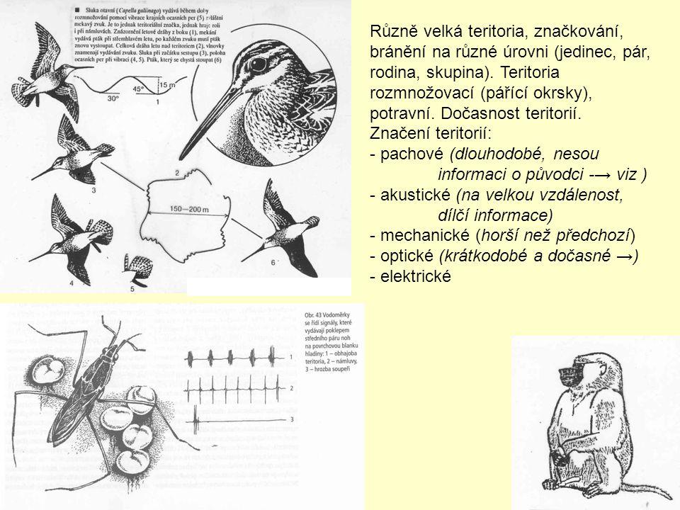 Různě velká teritoria, značkování, bránění na různé úrovni (jedinec, pár, rodina, skupina). Teritoria rozmnožovací (pářící okrsky), potravní. Dočasnos