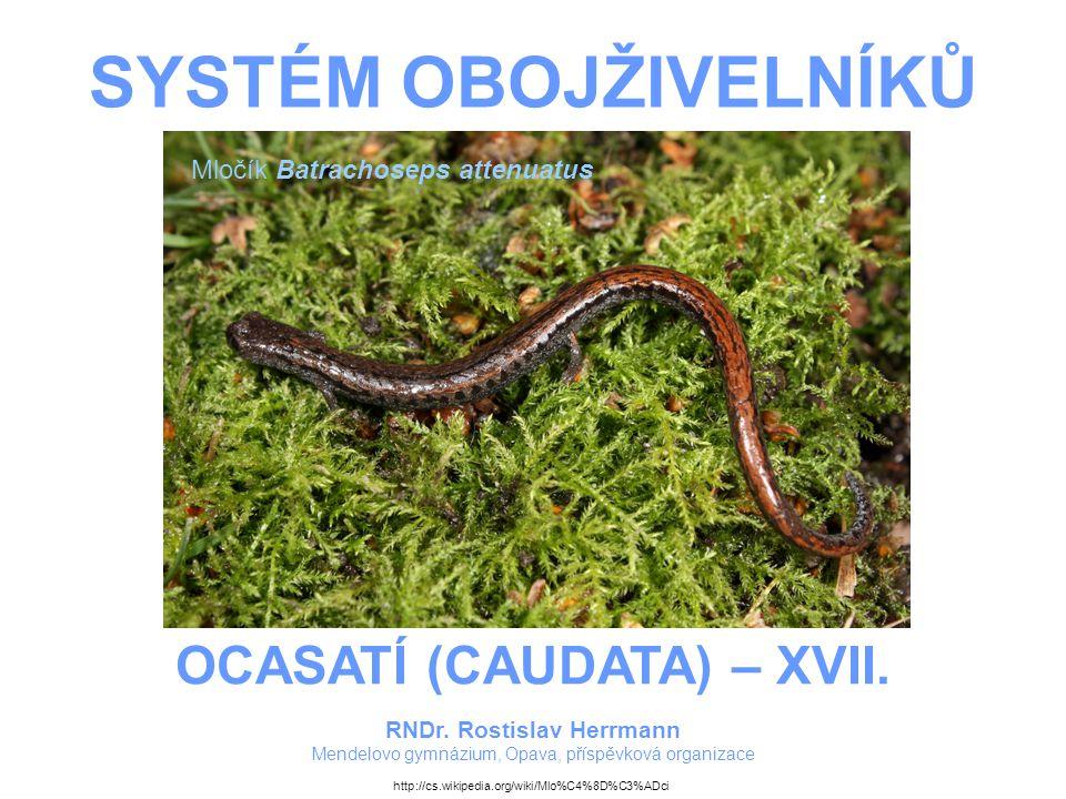 SYSTÉM OBOJŽIVELNÍKŮ – OCASATÍ (CAUDATA) – XVII.PAMLOKOVITÍ Drobní, asi do 15 cm dlouzí.