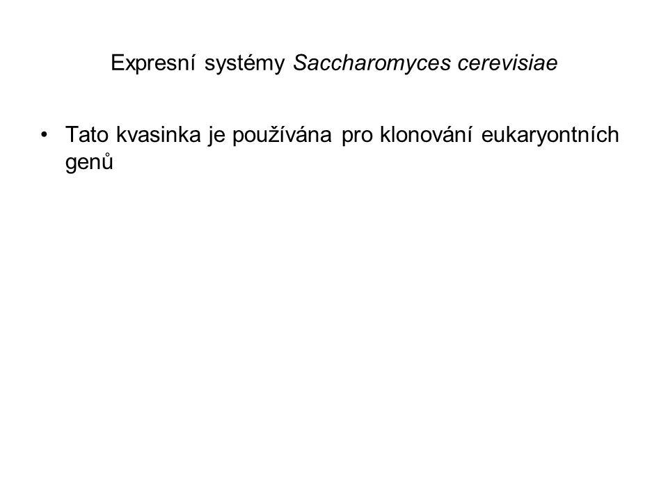Expresní systémy Saccharomyces cerevisiae Tato kvasinka je používána pro klonování eukaryontních genů
