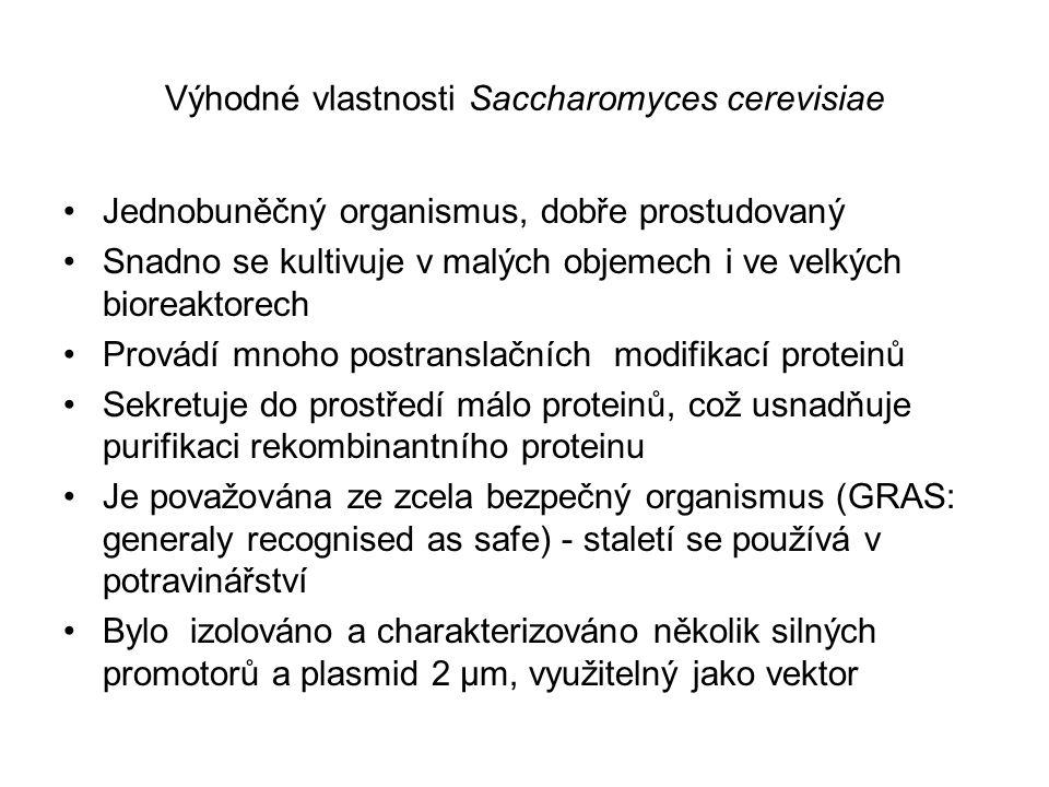 Výhodné vlastnosti Saccharomyces cerevisiae Jednobuněčný organismus, dobře prostudovaný Snadno se kultivuje v malých objemech i ve velkých bioreaktore