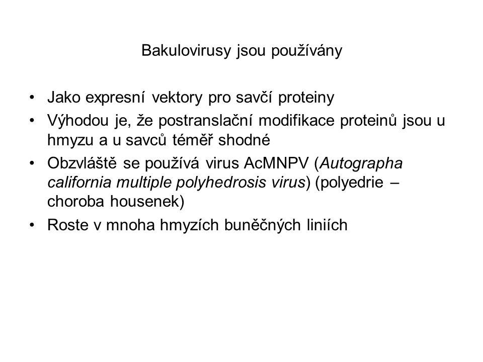 Bakulovirusy jsou používány Jako expresní vektory pro savčí proteiny Výhodou je, že postranslační modifikace proteinů jsou u hmyzu a u savců téměř sho