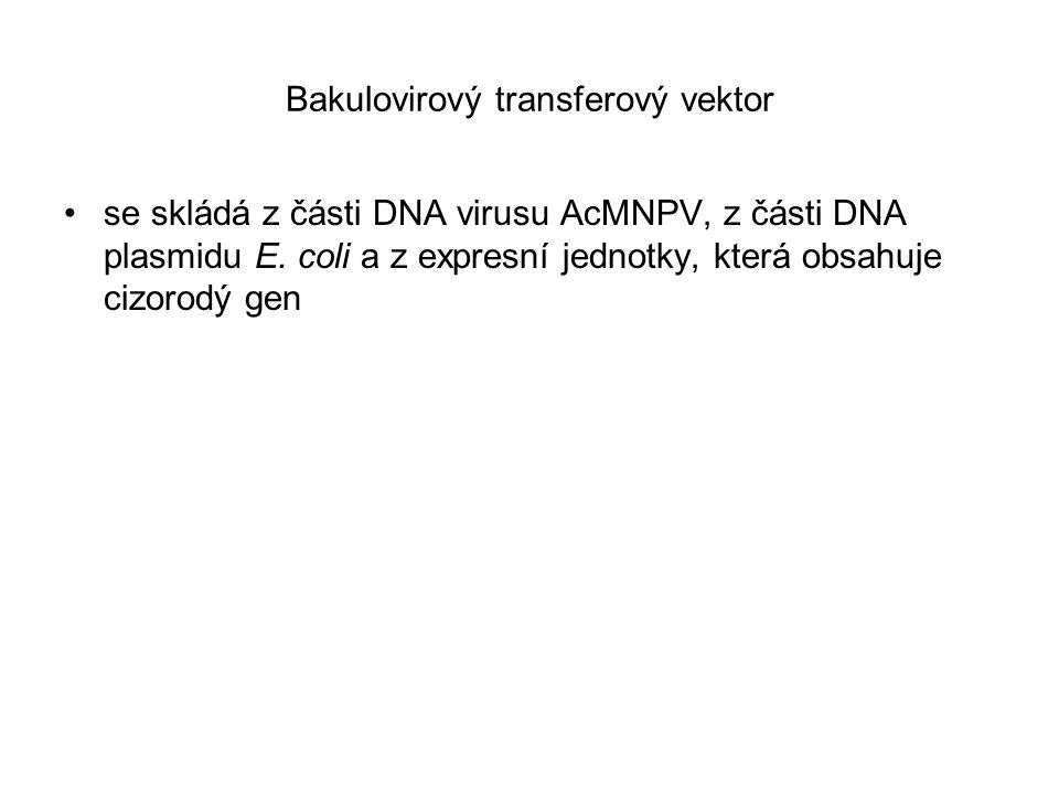 Bakulovirový transferový vektor se skládá z části DNA virusu AcMNPV, z části DNA plasmidu E. coli a z expresní jednotky, která obsahuje cizorodý gen