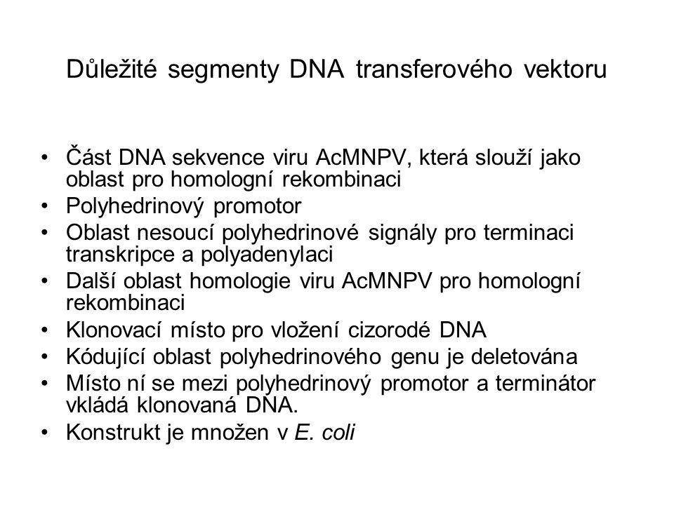 Důležité segmenty DNA transferového vektoru Část DNA sekvence viru AcMNPV, která slouží jako oblast pro homologní rekombinaci Polyhedrinový promotor O